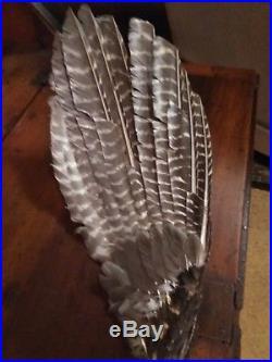 Louisiana Choctaw Indian Dance Fan Hand Made Native American Regalia. Artifact