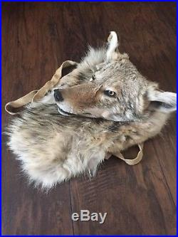 Native American Made Coyote bag with mounted head pow wow regalia taxidermy